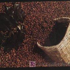 Postales: POSTAL - CAFÉ COLOMBIANO (COLOMBIA) SIN ESCRIBIR. Lote 7820092