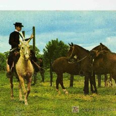 Postales: POSTAL ARGENTINA FOLKLORE ARGENTINO GAUCHO A CABALLO. Lote 14252314