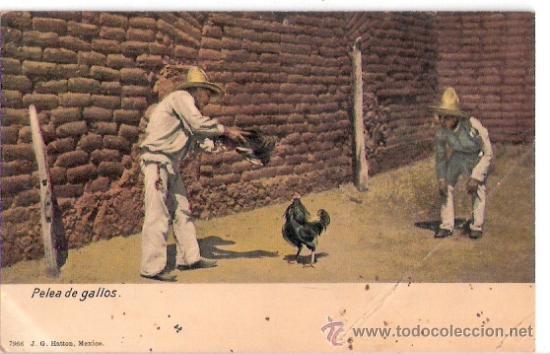 TARJETA POSTAL. MEXICO. PELEA DE GALLOS. Nº 7966. J. G. HATTON. (Postales - Postales Extranjero - América)