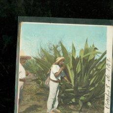Postales: TARJETA POSTAL COSTUMBRISTA. MEXICO. TLACHIQUERO. VER DORSO. . Lote 28826707