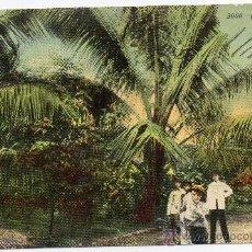 Postales: CUBA,1911,COCOANUTS PALMS,EDIT,HARRIS BROS CO.. Lote 30685748