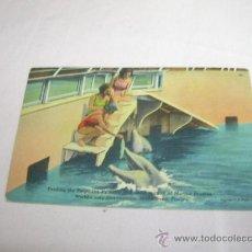 Postales: POSTAL DE FLORIDA AÑOS 50. Lote 31790530