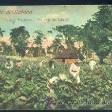 Cartes Postales: POSTAL DE CUBA - RECUERDO DE HABANA TABACCO PLANTATION - UNA VEGA DE TABACCO P-CUBA-046. Lote 33483426