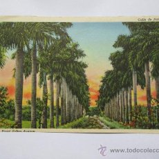 Postales: LA HABANA CUBA 1949, PARQUE FRATERNIDAD ESTATUA DE LA INDIA, ROYAL PALMS AVENUE, CALLE DE PALMAS. Lote 33712402