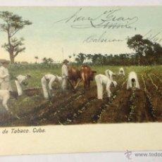 Postales: CUBA. SIEMBRA DE TABACO. (CIRCULADA EN 1905. HABANA, CUBA - BARCELONA). Lote 39842747