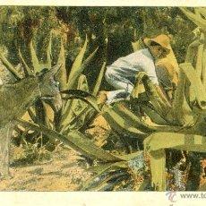 Postales: MEXICO. TLACHIQUERO. POSTAL COLOR, SIN CIRCULAR, C. 1905.. Lote 40178968