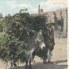 Postales: MEXICO. LOADED BURRO. POSTAL COLOR, SIN CIRCULAR, C. 1905. BUENA CALIDAD.. Lote 42602912