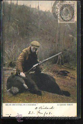 TARJETA POSTAL DE BEAR HUNTING IN CANADA. A GOOD SHOT. CIRCULADA A MATANZAS, CUBA (Postales - Postales Extranjero - América)