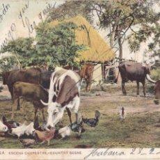 Postales: P- 3148. POSTAL LA HABANA, CUBA. Nº 38, ESCENA CAMPESTRE.. Lote 52548498