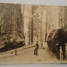Postales: TARJETA POSTAL KINGS CANYON NALL PARK CALIFORNIA SECUOYAS - NO CIRCULADA - 1920?. Lote 52940807