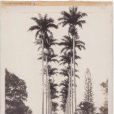 Postales: P- 3850. POSTAL FOTOGRAFICA DE RIO DE JANEIRO. JARDIN BOTANICO. Nº 57.. Lote 53100901