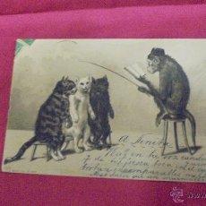 Postales: ANTIGUA POSTAL EN RELIEVE . TRES GATITOS EN CLASE. HAVANA. CUBA. 1902.. Lote 53487177