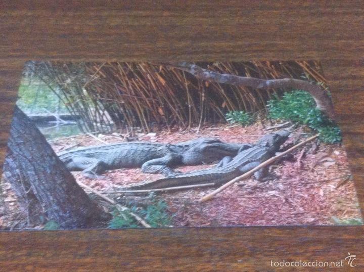 Postales: 12 postales New Orleans - Foto 16 - 62084399