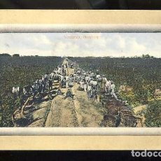 Postales: POSTAL DE MENDOZA (ARGENTINA): VENDIMIA (NUM.29150). Lote 80914064