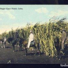 Postales: POSTAL DE CUBA: A SUGAR CANE FIELD. P^ANTACION DE CAÑA DE AZUCAR. CABALLOS (ED.HARRIS BROS). Lote 89468640