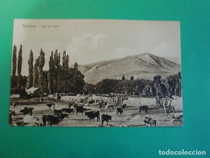 TUCUMAN TAFI DEL VALLE GANADO TARJETA POSTAL O.H. B.A. N. 34 - ARGENTINA AÑOS 20 (Postales - Postales Extranjero - América)