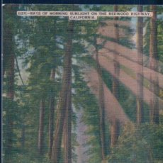 Postales: POSTAL RAYS OF MORNING SUNLUGHT ON THE REDWOOD HIGHWAY - CALIFORNIA - G211. Lote 115463619