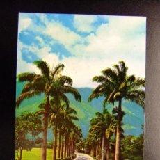 Postales: VENEZUELA CARACAS (CLUB) CAMINO DE PALMERAS. Lote 116348675
