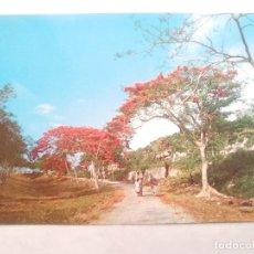 Postales: TARJETA POSTAL. GREETINGS FROM PUERTO RICO. 44835. Lote 124284727