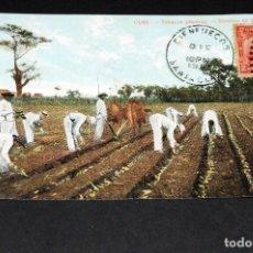 Postales: TARJETA POSTAL CUBA. SIEMBRA DE TABACO 33. Lote 128646083