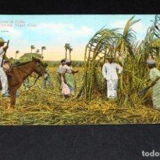 Postales: TARJETA POSTAL CUBA. CORTE DE CAÑA 23. Lote 128647251
