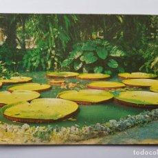Postales: BELEM VITORIA REGIA PLANTA AQUATICA AMAZONICA BRASIL. Lote 131075832