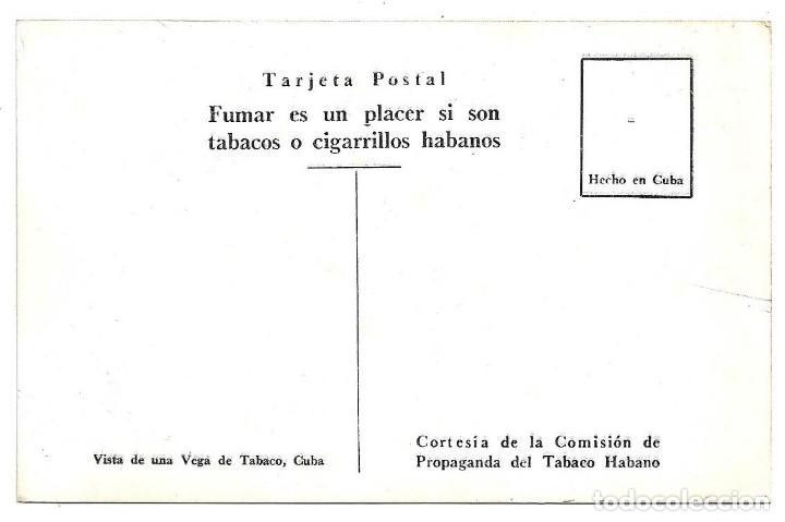 Postales: CUBA.- VISTA DE UNA VEGA DE TABACO .- EDICION COMISION DE PROPAGANDA DEL TABACO HABANO - Foto 2 - 147717634