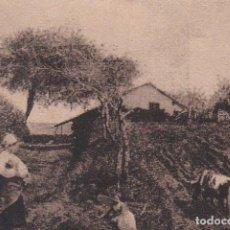 Postales: POSTAL ORIGINAL. DÉCADA 30. CHILE. ESCENA CAMPESTRE. Nº 1980. Lote 148641366