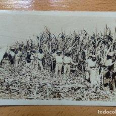 Postales: POSTAL FOTOGRAFICA - CUBA - UN CORTE DE CAÑA - ED. VIENA. Lote 152324758