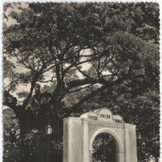 Cartes Postales: VENEZUELA, MARACAY (EDO ARAGUA) EL SAMÁN DE GÜERE - FOTO MEYNARDO Nº 271 - S/C. Lote 153507282