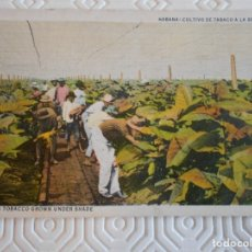 Postales: HABANA. CULTIVO DE TABACO A LA SOMBRA. REPUBLICA DE CUBA. POSTAL DE C. JORDI, OBISPO 526, HAVANA. CU. Lote 172309243