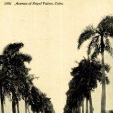 Postales: CUBA. AVENUE ROYAL PALMS. Lote 184324087