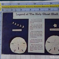 Postales: POSTAL DE ESTADOS UNIDOS. AÑOS 40 60. THE HOLY GHOST SHELL, MELLITA TESTUDINATA. CONCHA. 1807. Lote 187458177