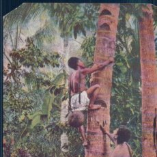 Postales: POSTAL MEXICO - THE COCOA NUTTREE - COCOS NUCIFERA IS TO THE NATIVE MEXICANS. Lote 192317107