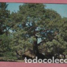 Postales: POSTAL DE MÉXICO MEJICO - LA CEIBA DONDE CORTES AMARRÓ SUS NAVES - V2156N. Lote 194958335