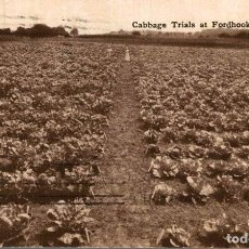 Postales: CABBAGE TRIALS AT FORDHOOK. MILLVILLE. Lote 196138547
