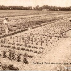 Postales: FORDHOOK TRIAL GROUNDS, JULY 1907. MILLVILLE. Lote 196138551