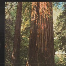 Postales: MUIR WOODS NATIONAL MONUMENT. MILL VALLEY. CALIFORNIA. USA.. Lote 207120772
