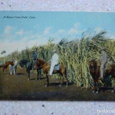 Postales: POSTAL CUBA - UN CAMPO DE CAÑA DE AZUCAR - HARRIS BROS. Lote 211421696
