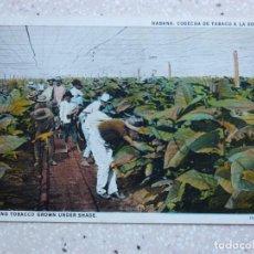 Postales: POSTAL CUBA CORTANDO TABACO CULTIVADO BAJO SOMBRA - CUTTING TABACCO GROWN UNDER SHADE - JORDI .1931. Lote 211427846