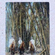 Postales: POSTAL CUBA - DEBAJO DE LOS ÁRBOLES DE BAMBÚ - UNDER THE BAMBOO TREES - HARRIS BROS. Lote 211428520