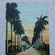 Postales: POSTAL CUBA - HABANA AVENIDA DE PALMAS - JORDI. Lote 211499145