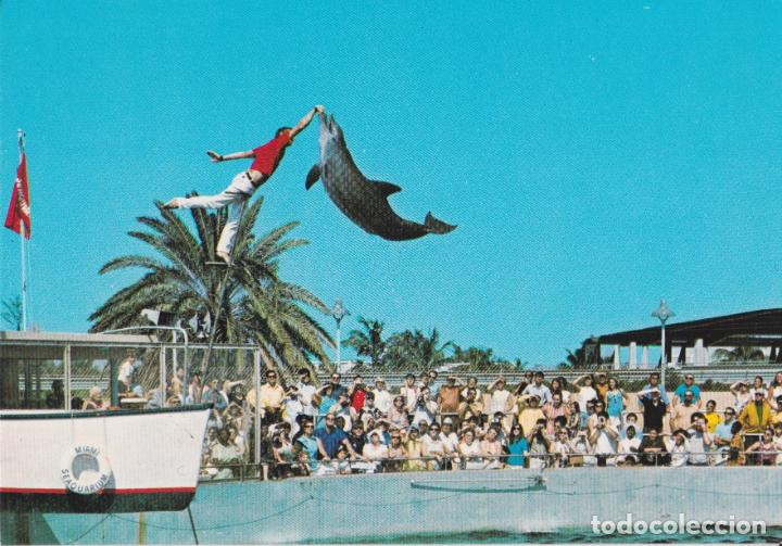 AMERICA, FLORIDA, MIAMI, ACUARIO - PHOTO BY JOHN GORDASH 5974 - S/C (Postales - Postales Extranjero - América)