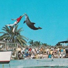 Postales: AMERICA, FLORIDA, MIAMI, ACUARIO - PHOTO BY JOHN GORDASH 5974 - S/C. Lote 219088310