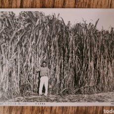 Postales: POSTAL 107 S. PAULO BRASIL CANNA - CAÑAS DE AZUCAR. WESSEL. Lote 222260873