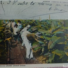 Postales: HABANA COSECHA DE TABACO A LA SOMBRA POSTAL 9 X 13 CTMS ESCRITA AÑO 1932.... Lote 242468220