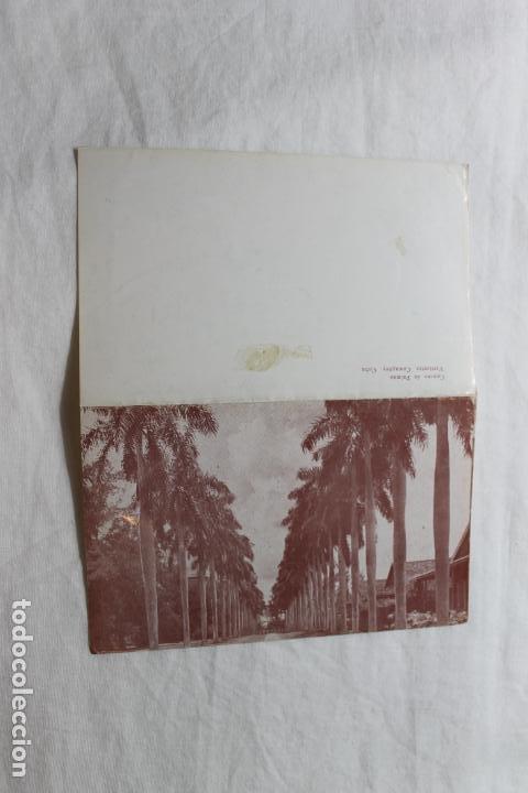 Postales: POSTAL CUBA CAMINO DE PALMAS VERTIENTES CAMAGUEY - Foto 2 - 278878973
