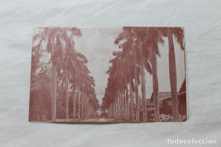 POSTAL CUBA CAMINO DE PALMAS VERTIENTES CAMAGUEY (Postales - Postales Extranjero - América)