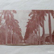 Postales: POSTAL CUBA CAMINO DE PALMAS VERTIENTES CAMAGUEY. Lote 278878973