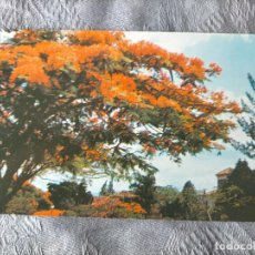 Postales: CARACAS - ACACIAS EN FLOR - VENEZUELA POSTCARD. Lote 286562838
